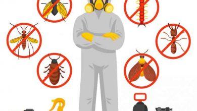 Photo of مكافحة حشرات المطبخ||65520387