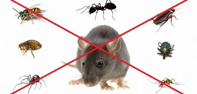 Photo of شركة حشرات بالكويت